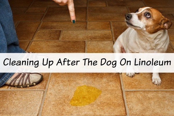 cleaning linoleum after dog messed