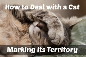 deal with cat marking territory