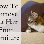 remove cat hair from furniture