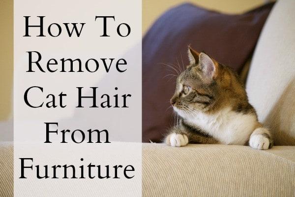 Ah Choo Cat Hair On The Couch