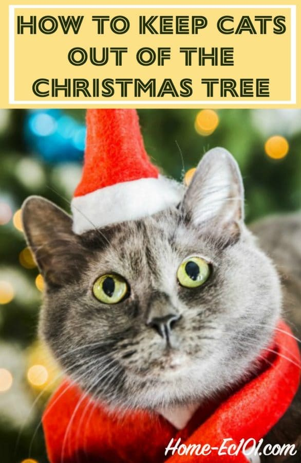 how to keep cats out of the christmas tree home ec 101. Black Bedroom Furniture Sets. Home Design Ideas