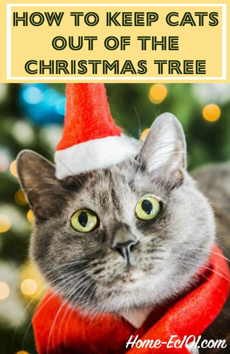 how to keep cats out of the christmas tree home ec 101 - How To Keep Cats Away From Christmas Trees