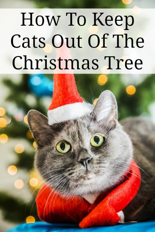how to keep cats out of the christmas tree. Black Bedroom Furniture Sets. Home Design Ideas