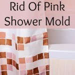 clean shower mold