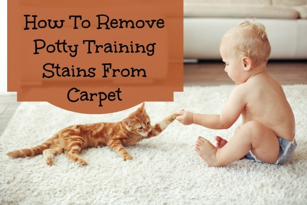 Ew! How to Get Poop Stains Out of Carpet | ServiceMaster Clean