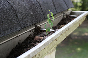 Gutters are not for gardening.