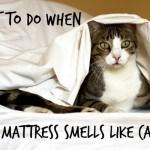 cat peed on mattress