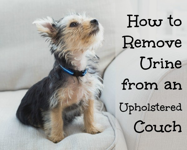 Odor Removal For Urine Soaked Sofa Home Ec 101