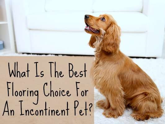 Choosing Flooring With An Incontinent Pet Home Ec 101