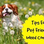weed control pet friendly