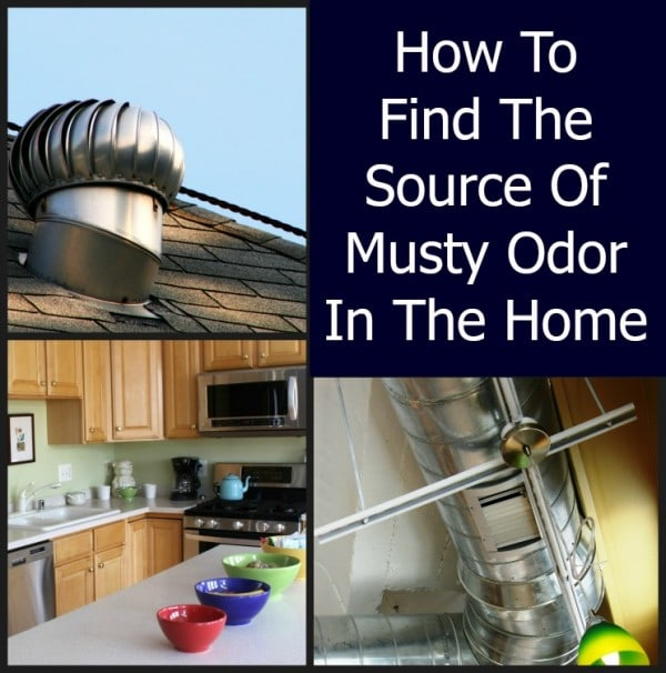 how to find the source of musty odor in the home