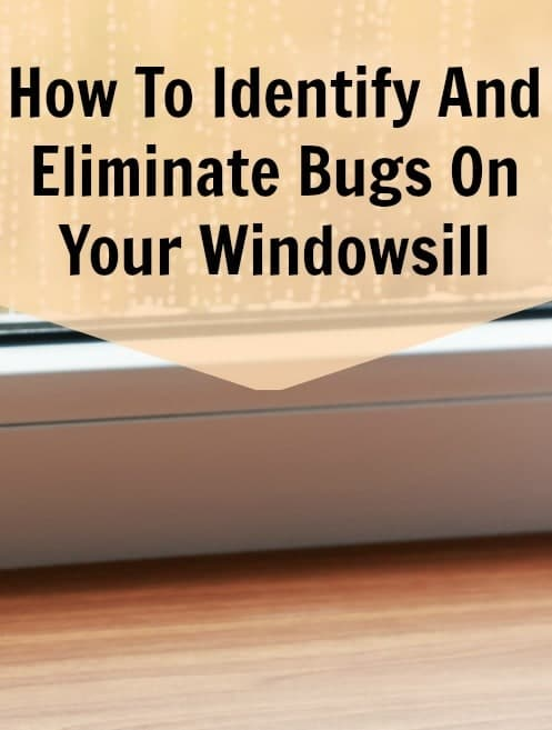how to get rid of bugs on the windowsill